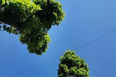 За неправильную обрезку деревьев в Бурятии будут штрафовать