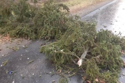 В Ивановской области водителя мопеда убило упавшее дерево