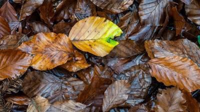 Погода на 25 октября: в Башкирии ожидается похолодание