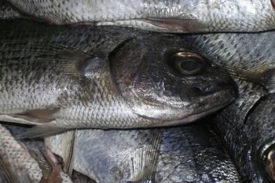 В Ташлинском районе зафиксирована массовая гибель рыбы